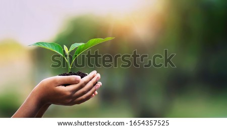 hand children holding young plant with sunlight on green nature background. concept eco earth day Photo stock ©