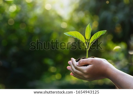 hand children holding young plant with sunlight on green nature background. concept eco earth day Foto stock ©