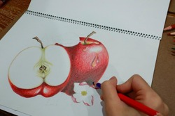 Hand drawing Apples on a white background. Using of color pencil to color an apple. Hand draw focusing on shadow hilight of fruit apple branch on white paper.