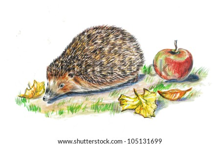 hand drawn animals, animals, art, drawing,  illustration, hedgehog, wild animals,