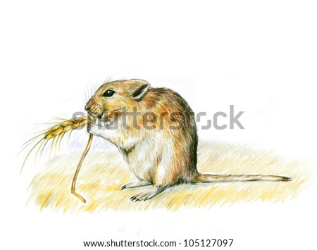 hand drawn animals, animals, art, drawing,  illustration, mouse, wild animals, mouse animal, wild mouse, rat,