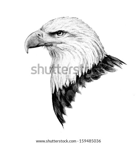 Sharp Eyes Drawing Hand Drawn Bald Eagle Head