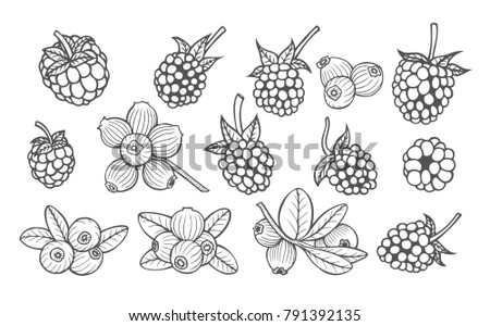 Hand drawn berries set.  sketches illustration