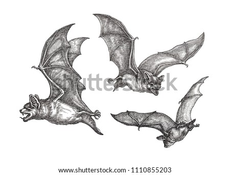 Hand drawn black and white illustration, three flying bats.