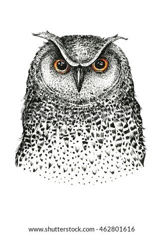 Hand drawn black white illustration owl fly bird. Art Coloring book.