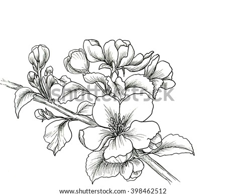 Hand drawn branch of cherry blossom isolated on white background. Hand drawn illustration. Ink drawing flowers. Contour pencil drawing. Hand drawn sketch. Drawn sketch of flowers. Doodles hand drawn #398462512
