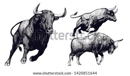 Hand drawn bull, Toro sketch Foto stock ©