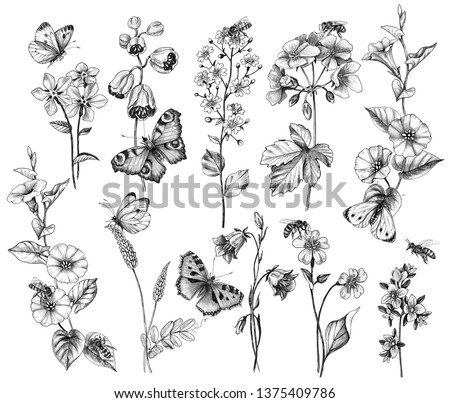 Hand drawn butterflies, bees and wildflowers isolated on white background. Set of monochrome pencil drawing flying and sitting insects near the flowers.  #1375409786