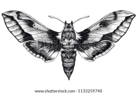 Hand drawn butterfly tattoo. Dotwork tattoo. Hummingbird hawk moth. Macroglossum stellatarum. Lepidoptera. Mystical symbol of freedom, beauty, life, perfection