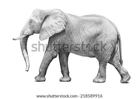 how to draw trunks full body