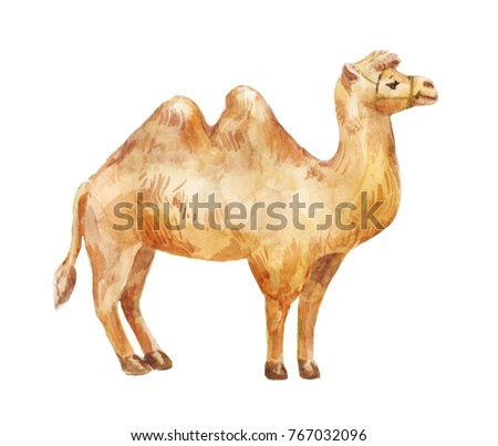 Hand drawn illustration of camel isolated on white background.