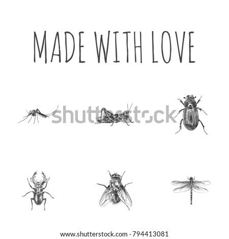 Hand Drawn Insects Sketches Set. Collection Of Insect, Gnat, Ground Beetle And Other Sketch Elements. #794413081