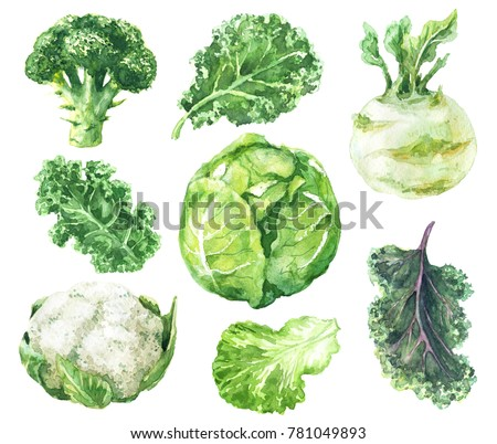 Hand drawn raw food illustration. Watercolor cauliflower, broccoli, kale, kohlrabi and salad leaf isolated on white background. Variety cabbages set.
