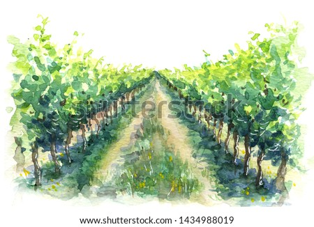 Hand drawn rural scene fragment of vineyard. Grape plant in rows watercolor sketch