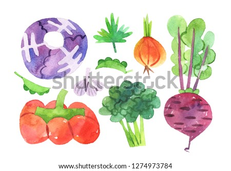 hand drawn set with watercolor vegetables. food. cabbage, pumpkin, pea, garlic, beet beetroot onion parsley broccoli- Illustration with clipping mask