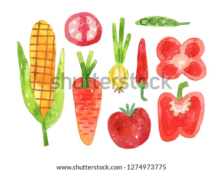 hand drawn set with watercolor vegetables. food. corn, carrot, tomato, onion, chili pepper pea - Illustration with clipping mask