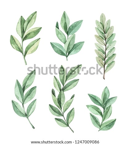 Hand drawn watercolor illustration. Botanical clipart with eucalyptus branches and leaves. Greenery. Floral Design elements. Perfect for wedding invitations, cards, prints, posters, packing
