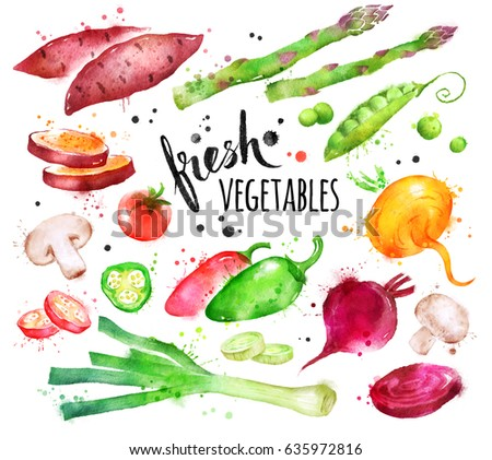 Hand drawn watercolor illustration set of fresh vegetables with paint splashes. #635972816