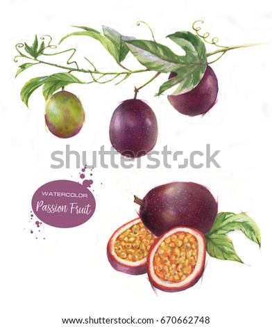 Hand-drawn watercolor illustration set of passion fruits isolated on the white background