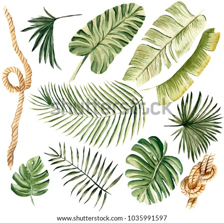 Hand drawn watercolor illustration tropical set of isolated elements objects leaves palm banana tree rope