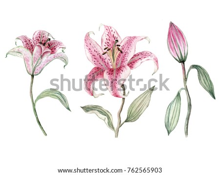 Hand drawn watercolor lily flower set.