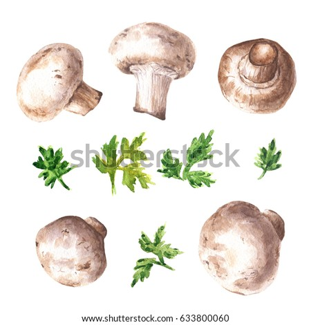 Hand drawn watercolor mushrooms with parsley, food illustration isolated on white background