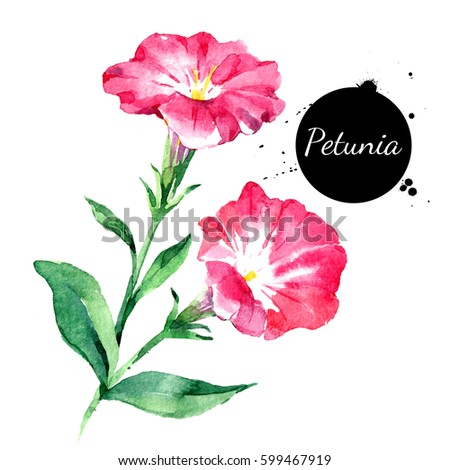 Hand drawn watercolor petunia flower illustration. Painted sketch botanical herbs isolated on white background