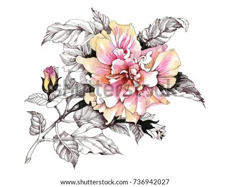 hand drawn watercolor pink...