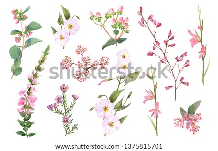 Hand drawn watercolor set with pink bloomy branches, herbs and leaves isolated on a white background. Ideal for creating invitations, greeting cards. Floral illustration. Watercolor botanic collection