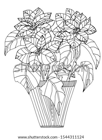 Hand draws coloring pages for children and adults. Christmas. Beautiful drawings with patterns and small details. Still life vase with flower christmas star. One of a series of anti-stress pictures