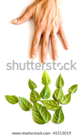 Hand form from green leafs against human hand
