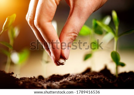 Hand growing seeds on sowing soil at the garden, agriculture concept. Photo stock ©