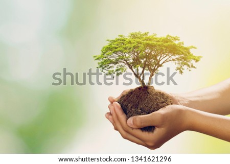hand holdig big tree growing on green background