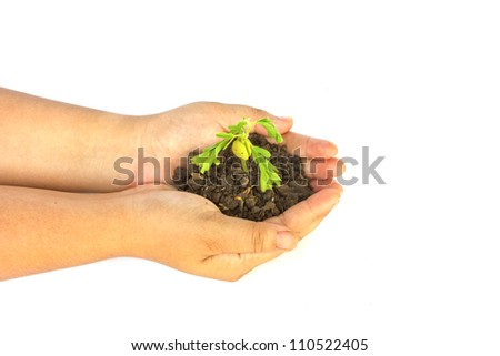 Hand holding a small plant
