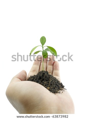 Hand holding a small plant - stock photo