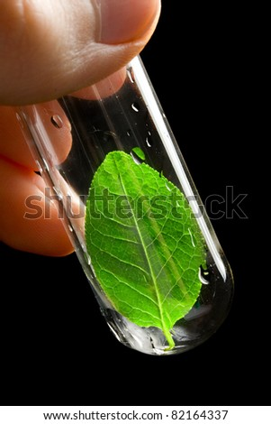 Hand holding a test tube with leaf