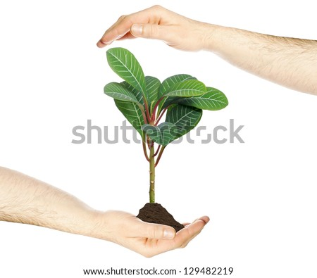 Hand holding a young plant / hand and plant