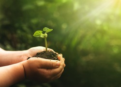 Hand holding bean plant on blur green nature background. Concept of the environment World Earth Day
