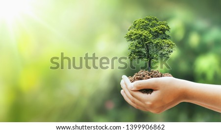 hand holding big tree growing on green background with sunshine #1399906862