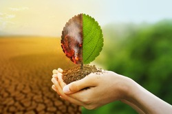 Hand holding burning leaf and Freshness of green leaf with drought and natural background metaphor fire forest and abundance of nature, Environmental and Climate change concept.