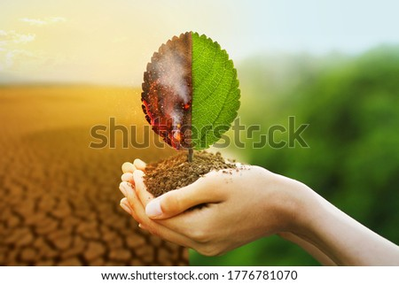 Hand holding burning leaf and Freshness of green leaf with drought and natural background metaphor fire forest and abundance of nature, Environmental and Climate change concept. Stock photo ©