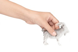 hand holding Goat toy made of plastic isolated on white background