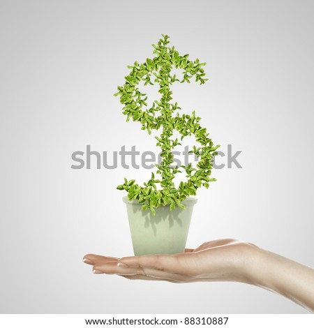 Hand holding green plant currency symbol in white pot