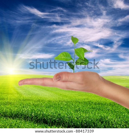 hand holding green plant over beautiful lanscape with green grass and blue cloudy sky - environment protection concept