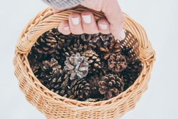 Hand holding natural beige color wicker basket with handle, filled with small colored pine cones, isolated on white. Countryside decoration. Instagram style filter.