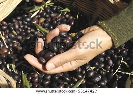 hand holding olives
