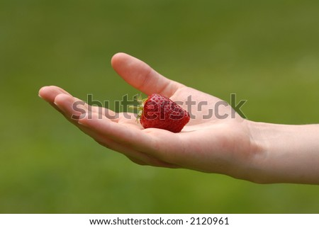 Hand holding out a ripe strawberry