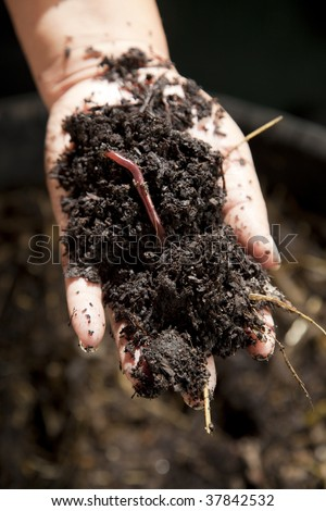 Hand holding out organic compost showing earthworm