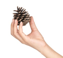 hand holding Pinecone isolated on white background