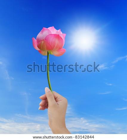 Hand holding pink lotus